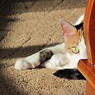 PeekABoo Cat by elisab