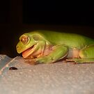The laughing Frog. by Cathie Trimble