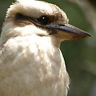 Kookaburra Portrait by James Millward