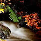 FALL IN THE PACIFIC NORTHWEST... by RoseMarie747