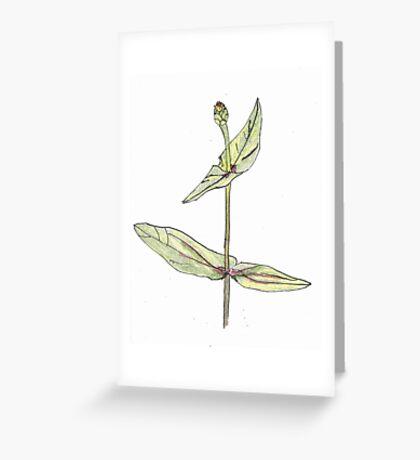 zinnia Greeting Card