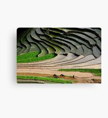 Water season in Sapa Canvas Print