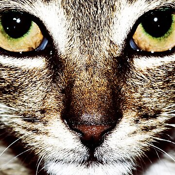 Into the eyes of a kittys' soul by Alphafish