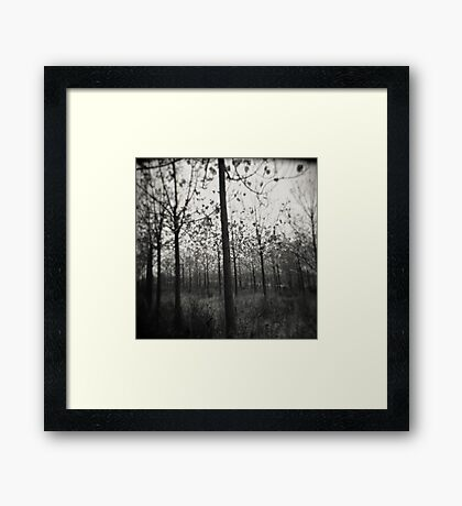 nature's lines Framed Print
