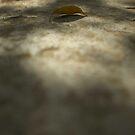 Leaf by minako375