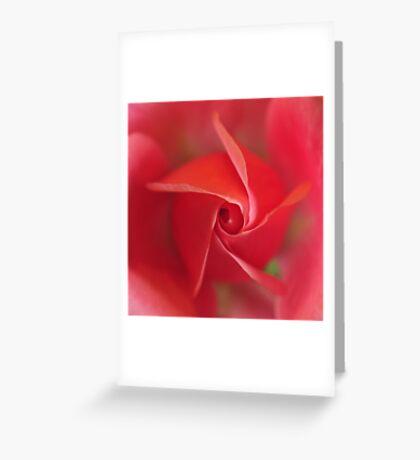 Rose   VIII. Greeting Card