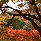 autumn colour arashimaiya  by OTOFURU