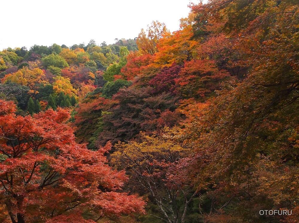 autumn colour arashimaiya 2 by OTOFURU
