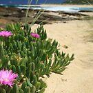 Beach Beauty - Margaret River Mouth Beach, WA, Australia by cookieshotz