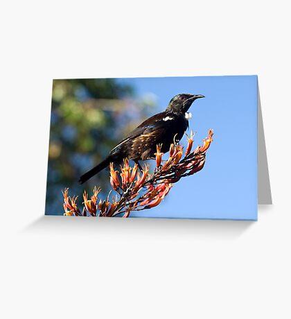 Tui - Northland NZ Greeting Card