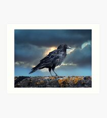 Rook on the Roof. Art Print