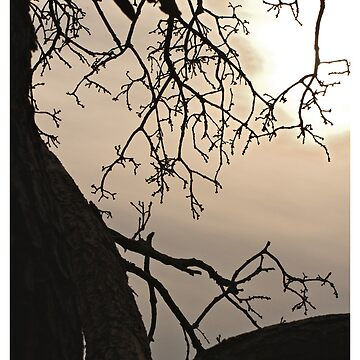Branches by DanRedrup