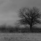 Lonely Tree by Sean McConnery