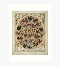 Poultry of the World (1868) Art Print