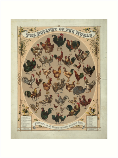 Poultry of the World (1868) by allhistory