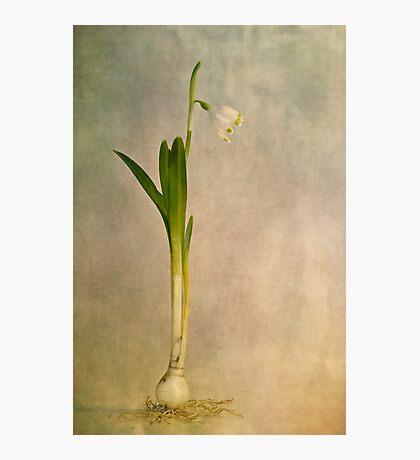 foretaste of spring Photographic Print