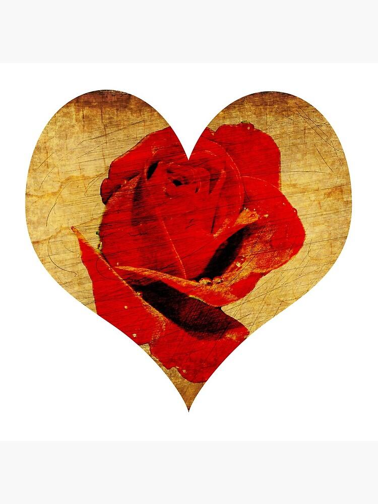 Rose,love,grunge,red. by starchim01
