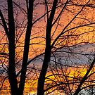 Sunset Through the Tree Silhouette by Bo Insogna