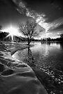Snowbound Tree by Bob Larson