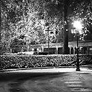 Night light in the park by Alexander Davydov