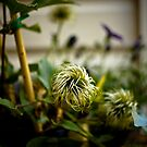 Seeds by Daniel Neuhaus