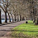 Park by the river by Alexander Davydov