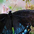 πεταλούδα by Brook Winegardner