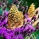 Social Butterfly by Brook Winegardner