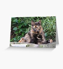 Feral Kitty Greeting Card