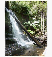 Lilydale Falls - Lilydale, Tasmania Poster