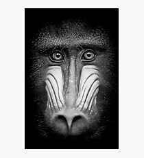 Portrait Of A Mandrill Photographic Print