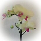 Orchid by ANDREW BARKE