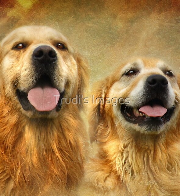 All Smiles by Trudi's Images