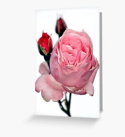 Oakbank Rose Greeting Card