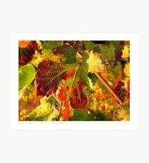 Grape Leaves - Tuscany Vineyard, Italy Art Print