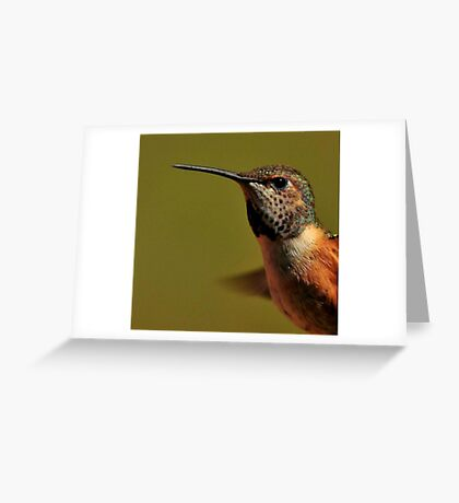 RUFUS HUMMINGBIRD...G Greeting Card