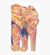 Colourful / Colorful Baby Elephant Portrait Photographic Print
