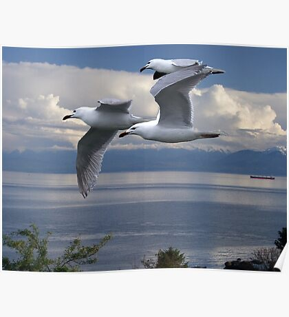 Gulls in Flight Poster