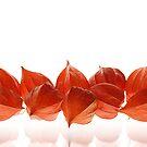 Orange Lanterns by Igor Mazulev
