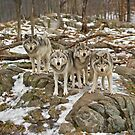 Wolf Pack by Daniel  Parent