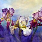 Bearded Irises by Joe Cartwright