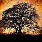 Fiery Winter Tree by Annabelle Ward