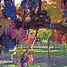 Vineyard Branch by CherylBee