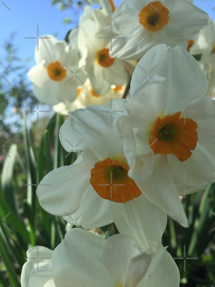 Daffodils by Morgan035