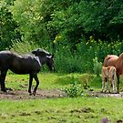 Horse Family by AnnDixon