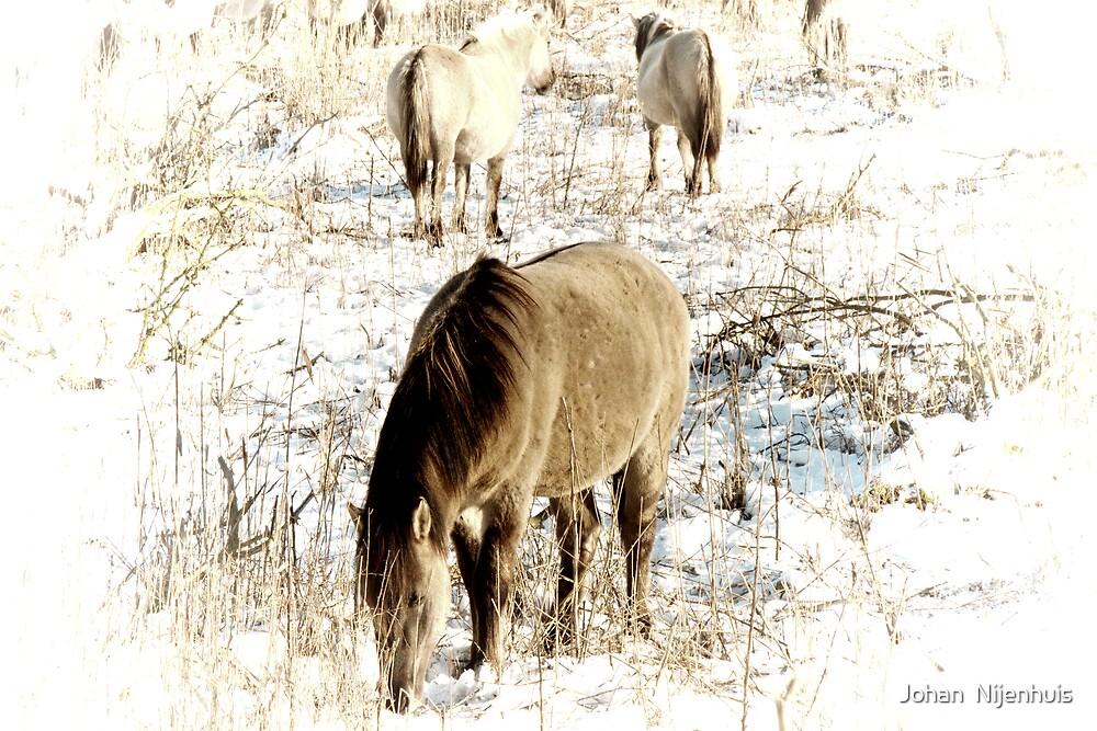 KONIK HORSES IN A BARREN LAND by Johan  Nijenhuis