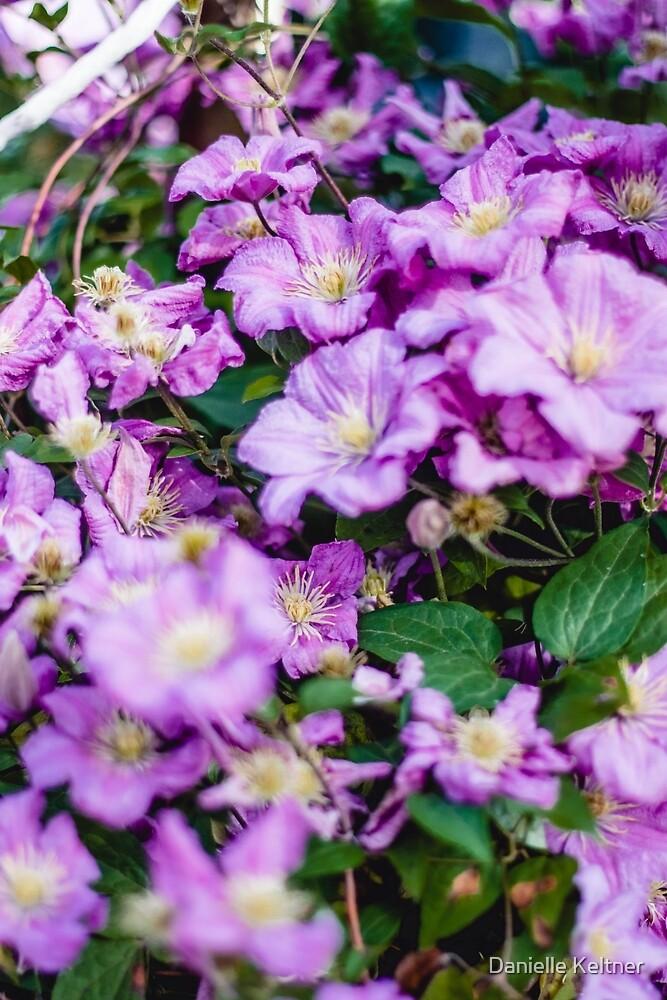 Flower by Danielle Keltner