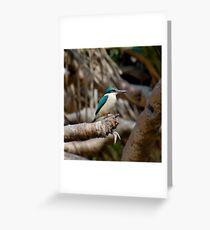 KINGFISHER ~ SC ~ WO ~ Sacred Kingfisher by David Irwin 031019 Greeting Card