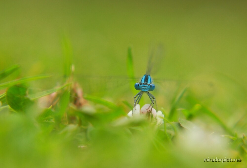 A damsel in distress  by miradorpictures