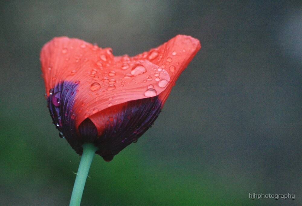 Raindrop by hjhphotography